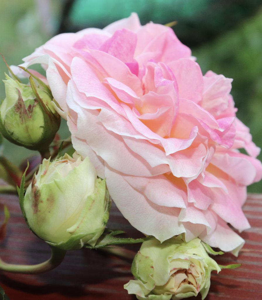 Цветы — природы совершенство!