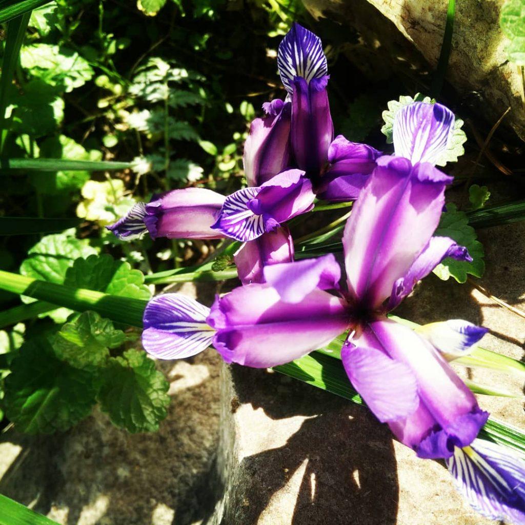 Садовые цветочки