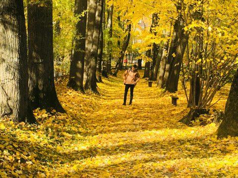 Что такое осень…