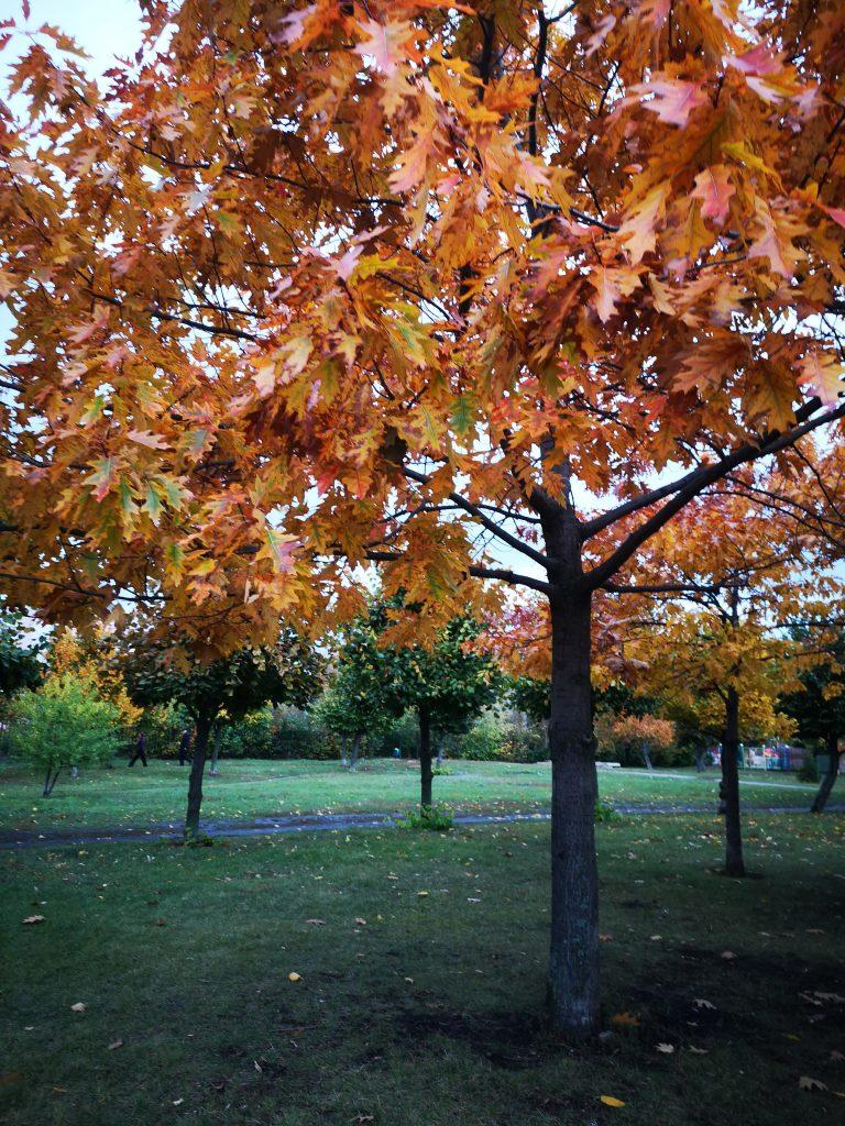 Осень. Печальна ты в золоте тленном…⠀
