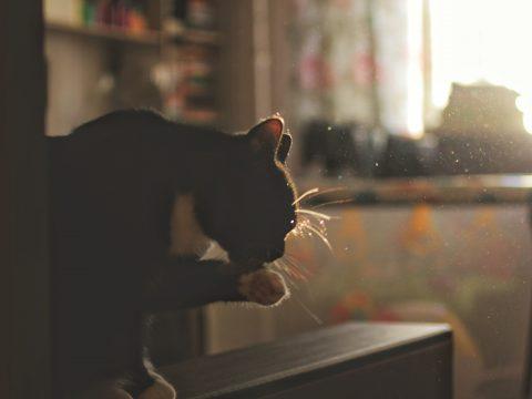Самая чистая кошка в мире