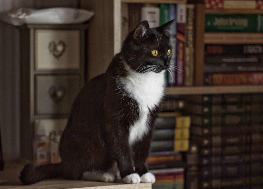 Самая начитанная кошка в мире