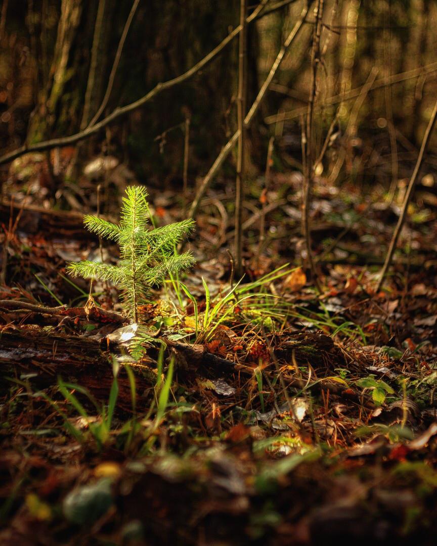 В лесу родилась елочка, в лесу она росла! ;)