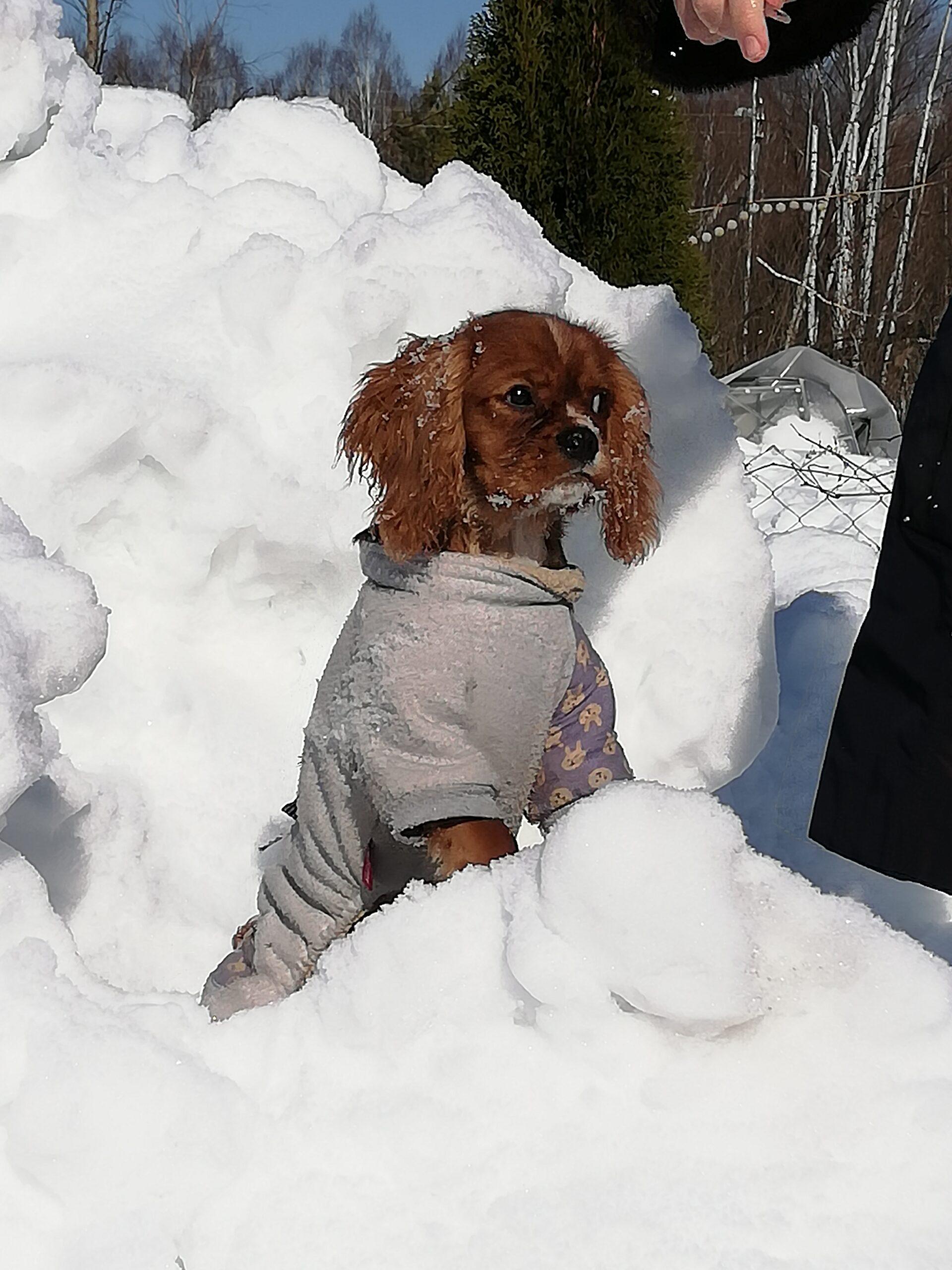Царь снежной горы