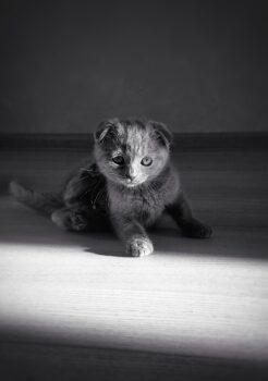 Котенок-детектив