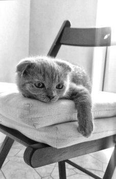Котенок-мыслитель