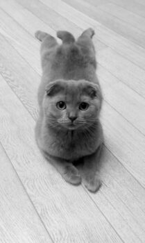 Кошка-сосисон