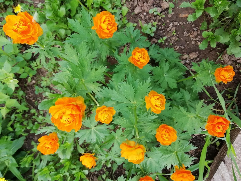 цветы оранж