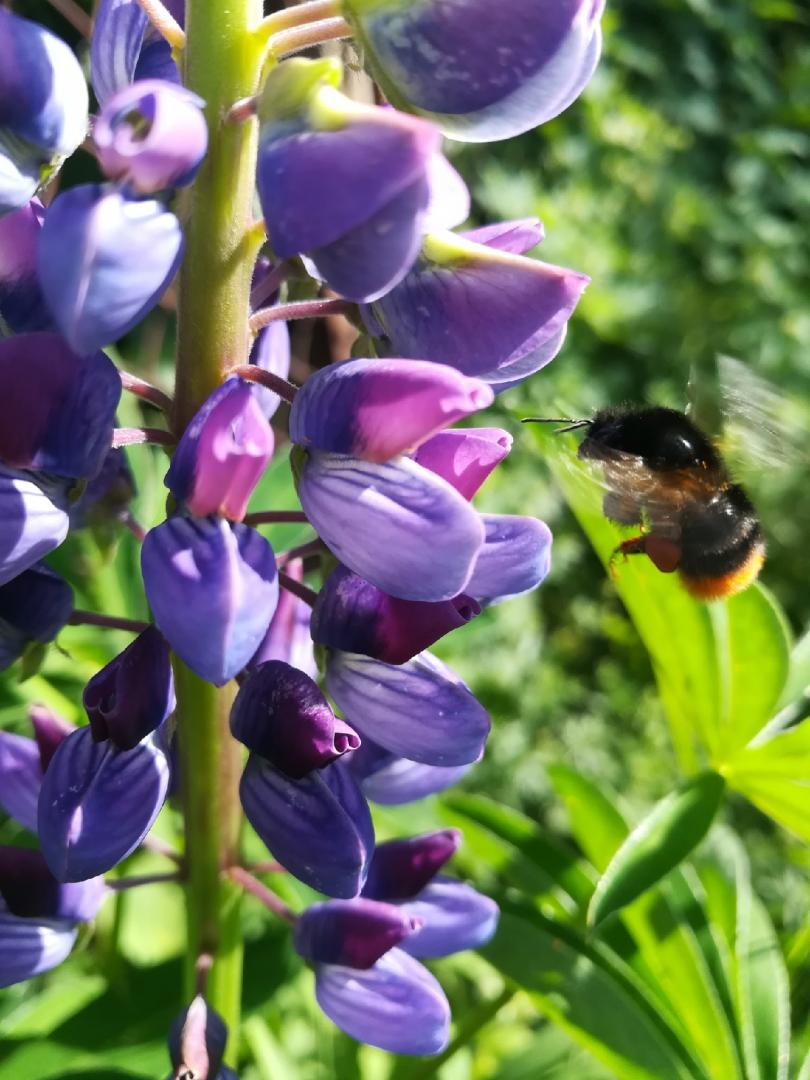 цветок с пчелкой