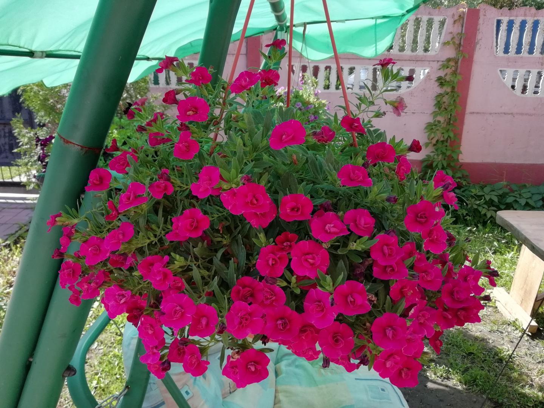 розовые подвесные