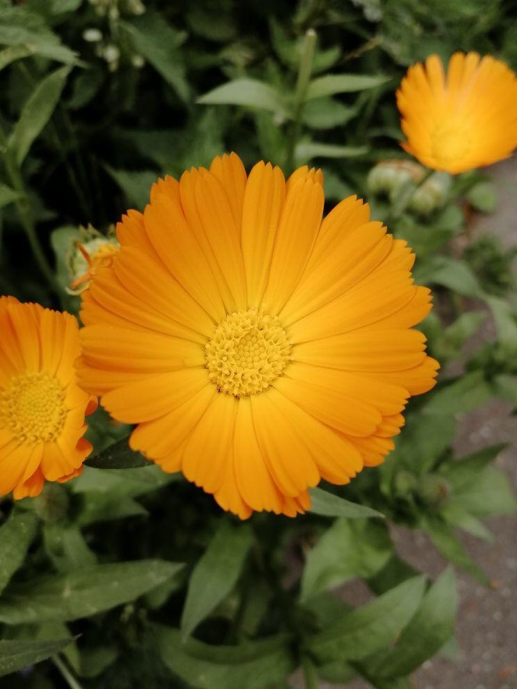 оранже