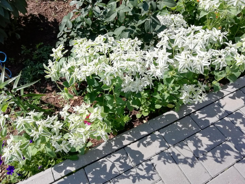 бел-цветы
