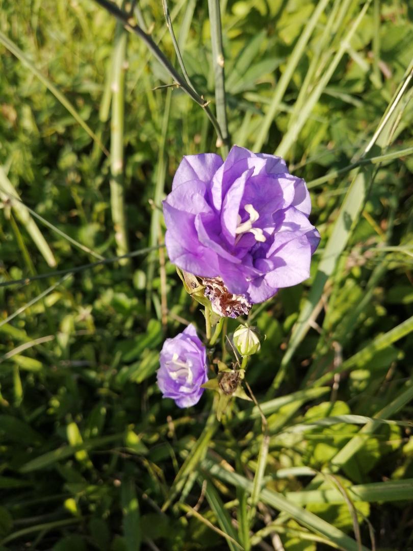 фиолет.