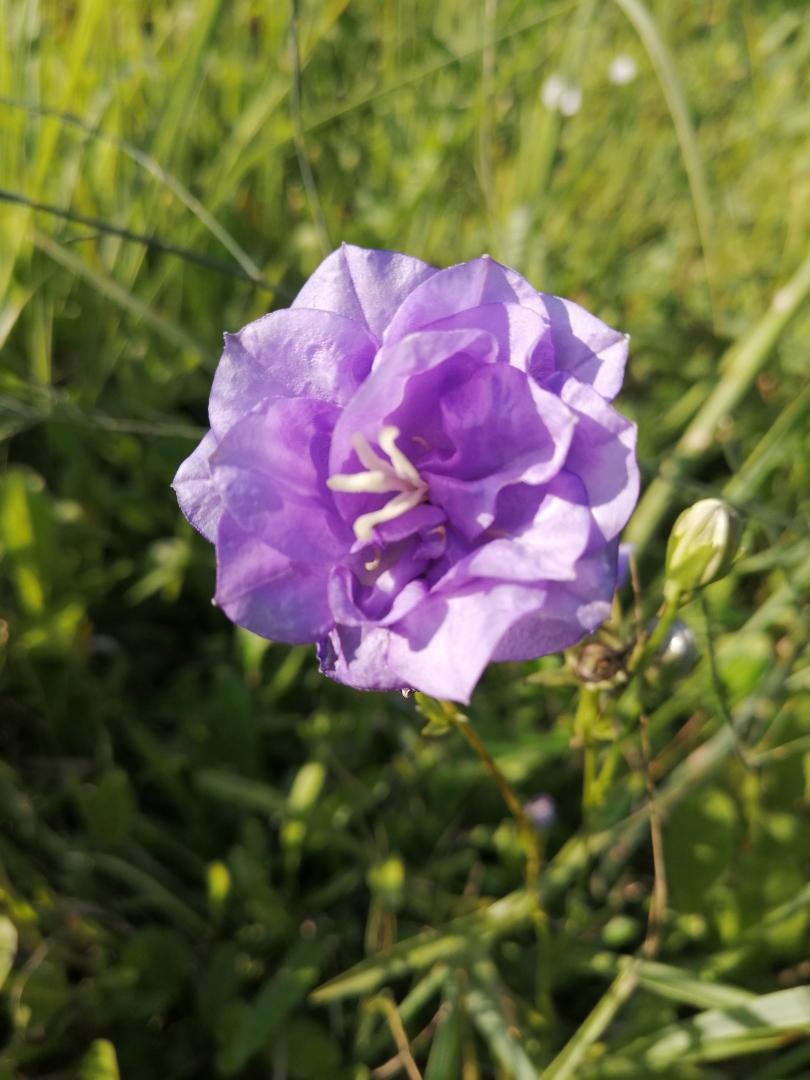 фиолет1