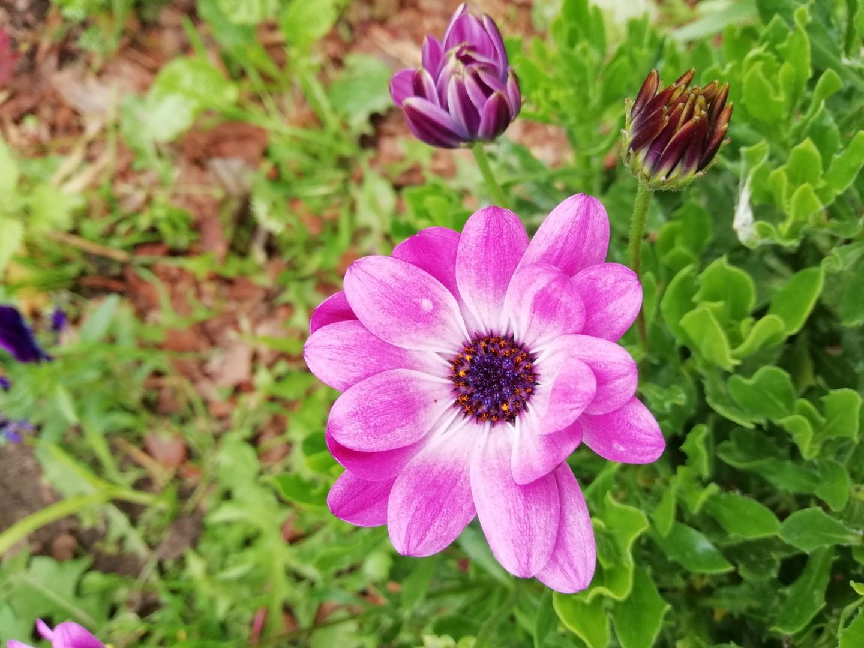 роз.цвет1